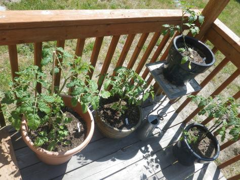 Grow food!