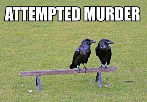 attemptedmurder