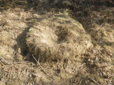 This used to be a big round anthill, like a grass Ms. Muffet's tuffet.