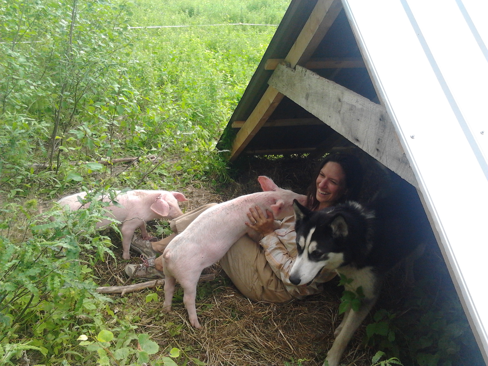 Piglets!  And dog, and sunburn...
