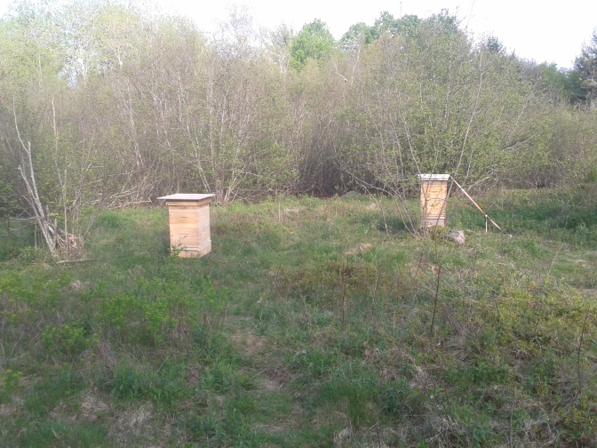 New bee boxes