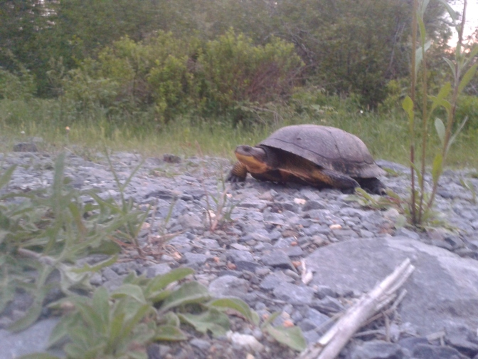 And another turtle…