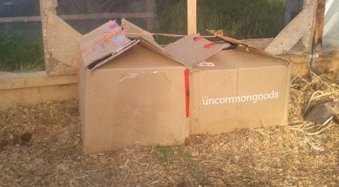 Chickens in a box- lockdown!