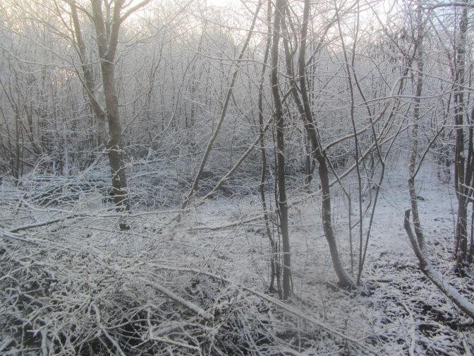 Real snow