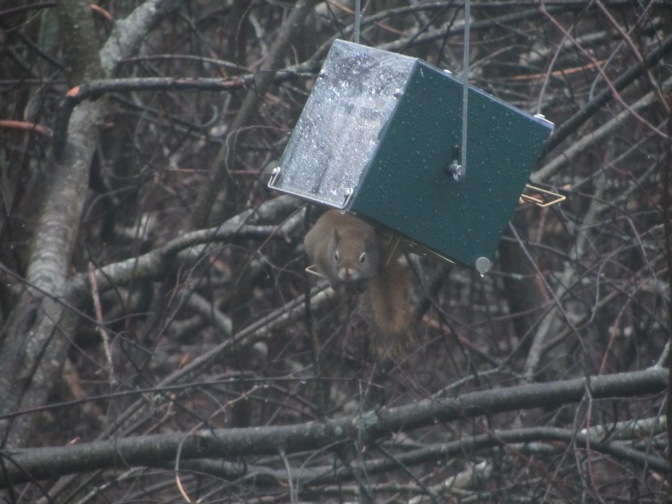 The squirrel proof bird feeder