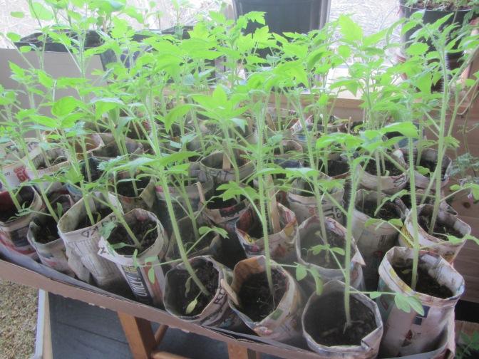 Peak Seedlings