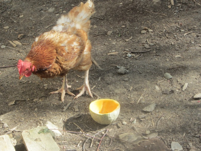 Chicken treat!