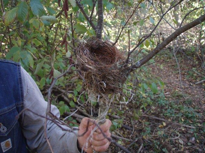 A very nice nest