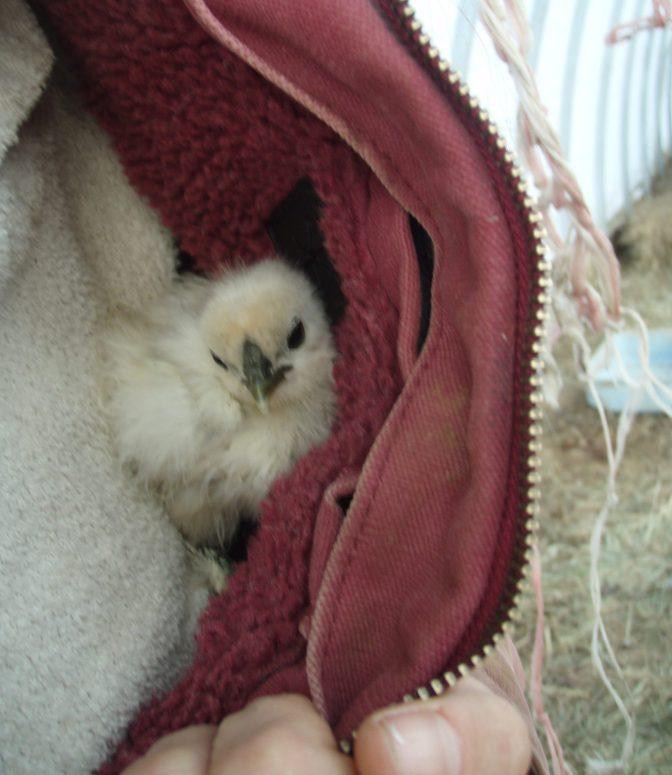 I'm a cozy chick!